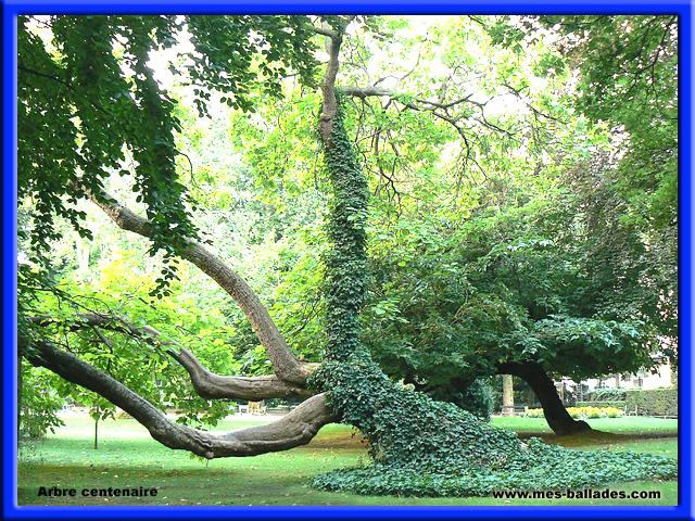 Le jardin du luxembourg a paris 75006 for Arbres jardin du luxembourg
