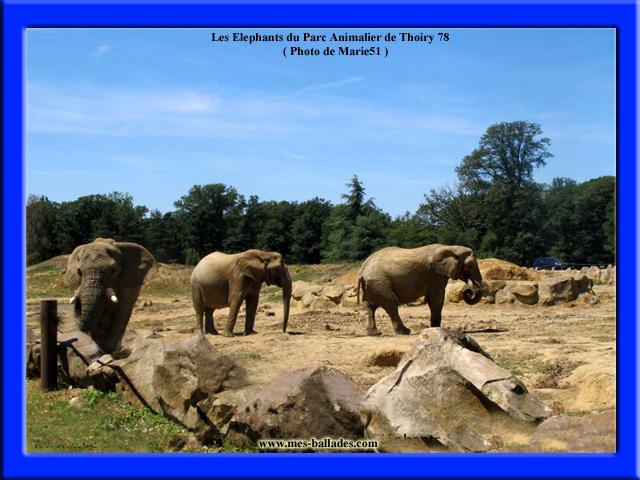 Le parc animalier de thoiry en yvelines 78770 for Zoo en yvelines