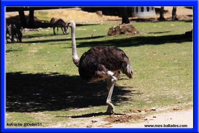 Le parc animalier de thoiry en yvelines 78770 for Parc animalier yvelines