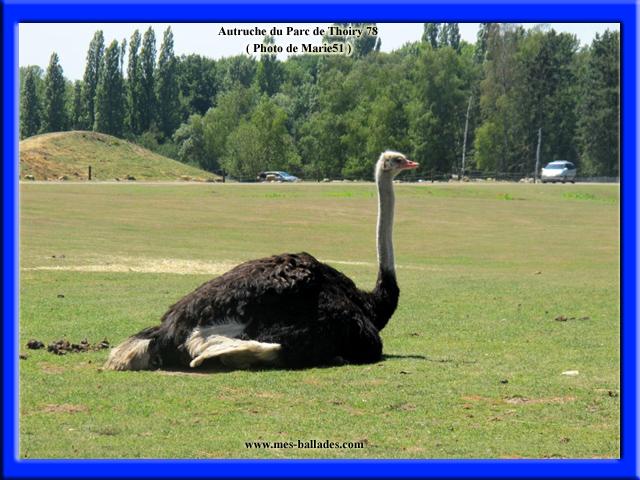 le parc animalier de thoiry en yvelines 78770