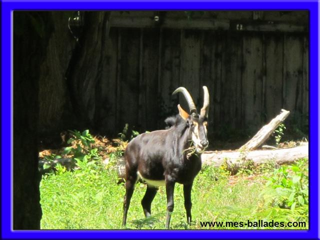 Le parc animalier de thoiry en yvelines 78770 for Parc yvelines visiter
