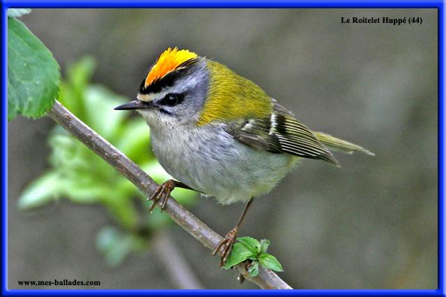 La faune en loire atlantique 44 en france for Les oiseaux du sud de la france